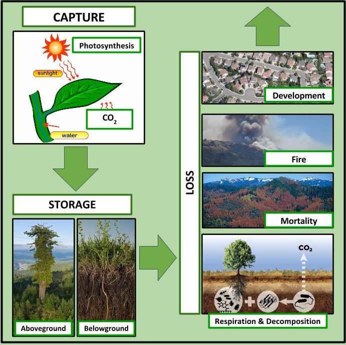 carbon_conceptualdiagram